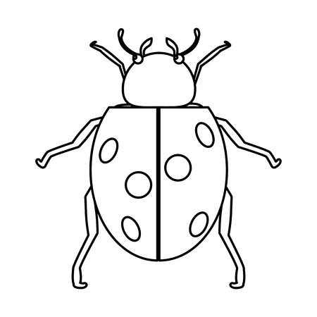 line nature ladybug insect animal of spring