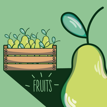 Pears inside wooden box vector illustration graphic design