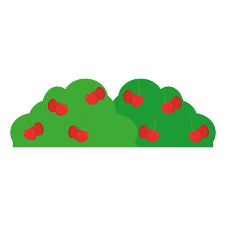 bush plant with delicious cherrys fruit vector illustration