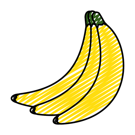 doodle organic bananas delicious organic fruits vector illustration
