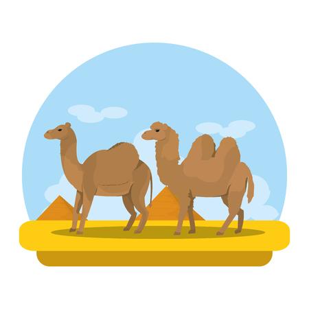 camel and dromedary desert animal travel