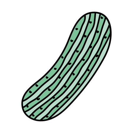 color fresh cucumber healthy nature vegetable vector illustration