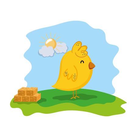chick farm animal with straw bale Stock Photo