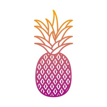 degraded line delicious pineapple organic fruit nutrition vector illustration Illustration