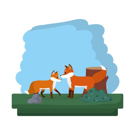 couple fox wild animal reserve vector illustration Illustration