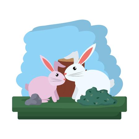 couple rabbit wild animal reserve Stock Photo
