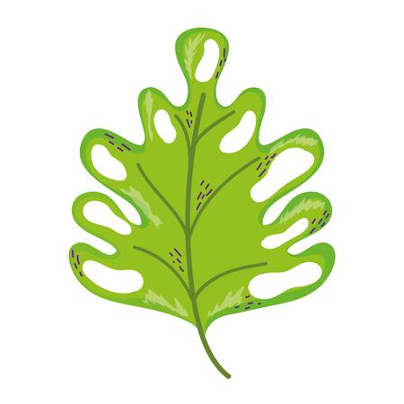 botany beauty leaf exotic style vector illustration
