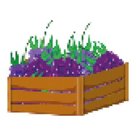 pixelated, delicious grapes fruit inside wood basket vector illustration Vettoriali