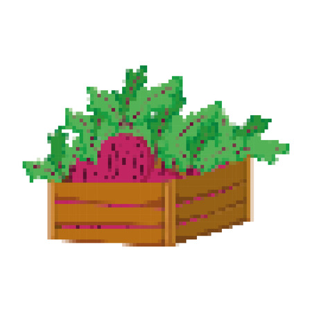 pixelated fresh onion vegetables inside wood basket vector illustration Illustration