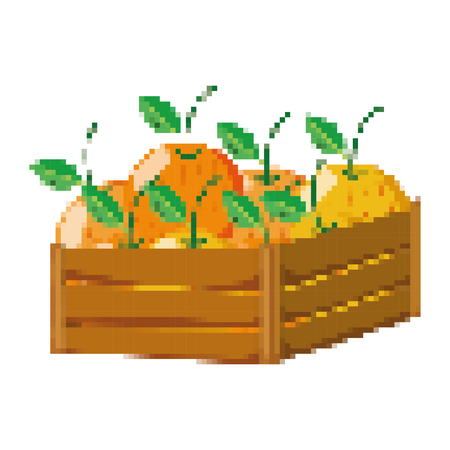 pixelated delicious oranges fruits inside wood basket vector illustration