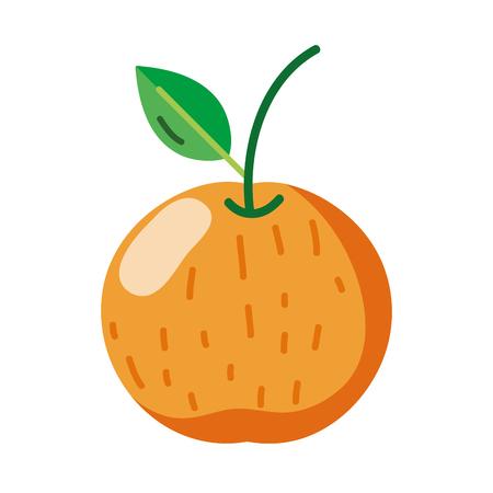 delicious orange fresh fruit nutrition vector illustration