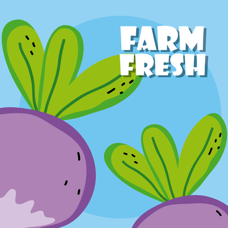 Farm fresh eggplants harvest cartoons vector illustration graphic design