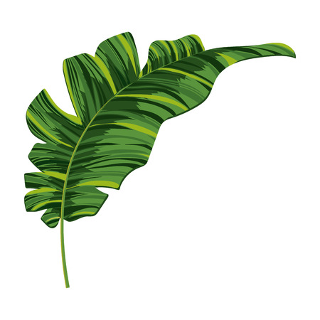 nature leaf cartoon vector illustration graphic design