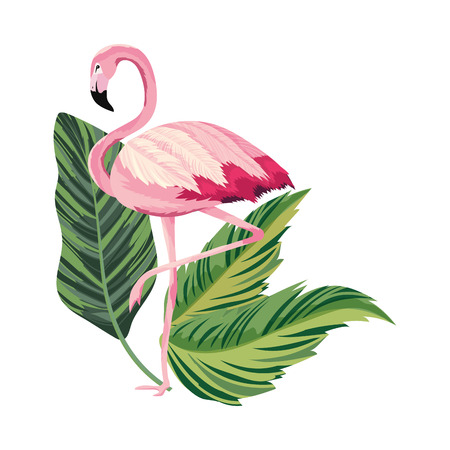 tropical flamingo over leafs cartoon vector illustration graphic design