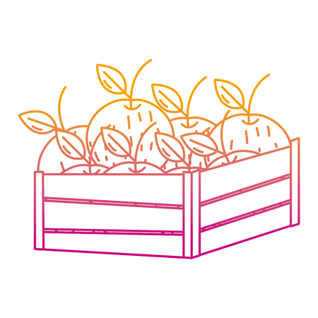 degraded line delicious oranges fruits inside wood basket vector illustration Ilustrace