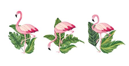 set exotic flamingos tropical wild animal vector illustration