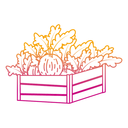 degraded line healthy onion vegetables inside wood basket vector illustration Illustration