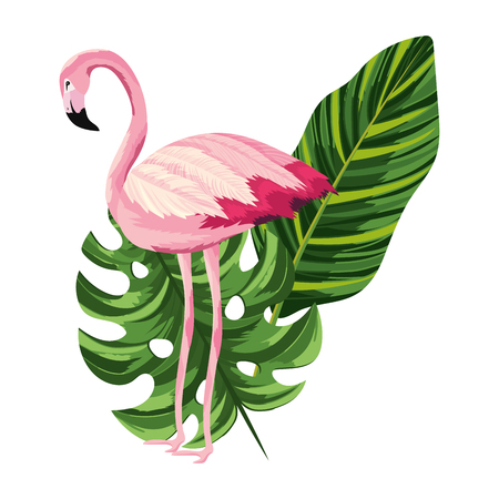 tropical flamingo with sheet leaf cartoon vector illustration graphic design