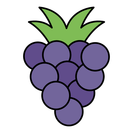 grapes fresh fruit icon vector illustration design Illusztráció