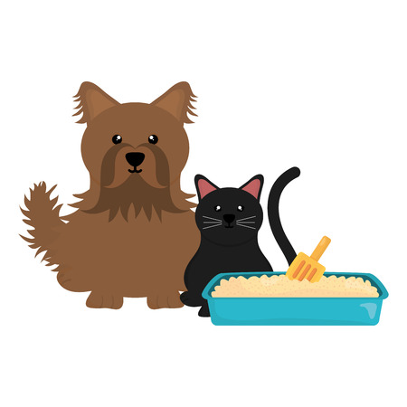 cute little cat and dog with sandbox