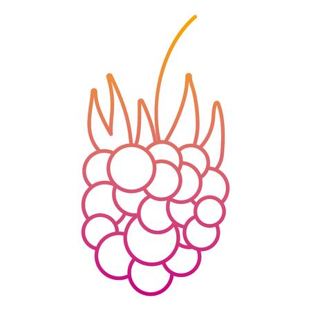 degraded line delicious grapes fresh fruit nutrition vector illustration Banque d'images - 122634163