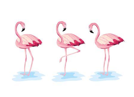 set flamingos tropical wild animal vector illustration