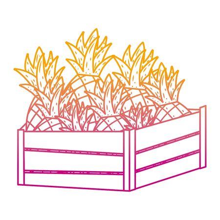 degraded line delicious pineapples fruits inside wood basket