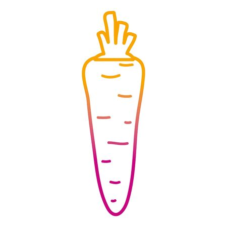 degraded line healthy carrot fresh organic vegetable vector illustration