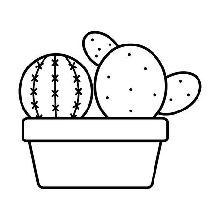exotic cactus plants in square ceramic pot vector illustration design