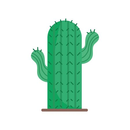 cactus desert plant on white background vector illustration