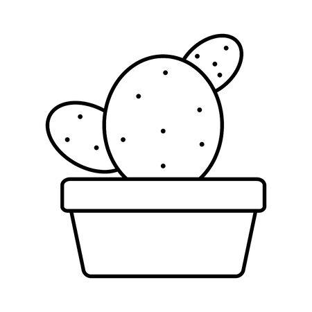 exotic cactu plant in square ceramic pot