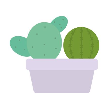 exotic cactus plants in square ceramic pot