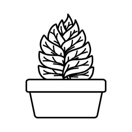 house plant in square ceramic pot