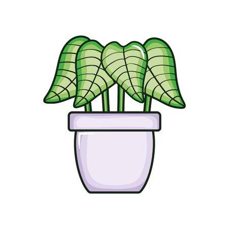 plant nature in ceramic pot