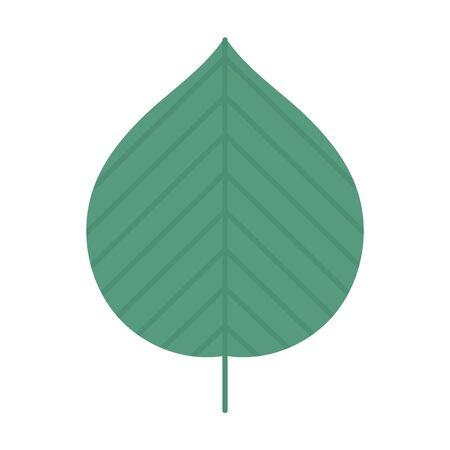 green natural leaf foliage autumn on white background vector illustration Illusztráció