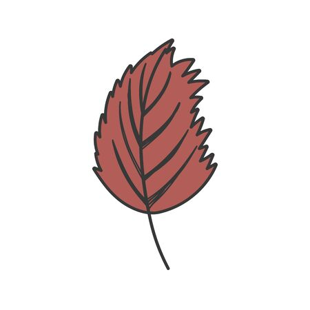 natural leaf foliage autumn on white background vector illustration Stock fotó - 133720467