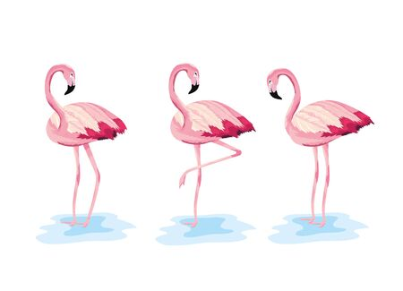 set flamingos tropical wild animal vector illustration Foto de archivo - 133703554