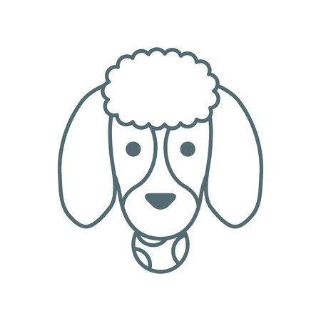 cute little dog French poodle head with ball line style