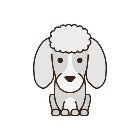 cute little dog French poodle fill style icon