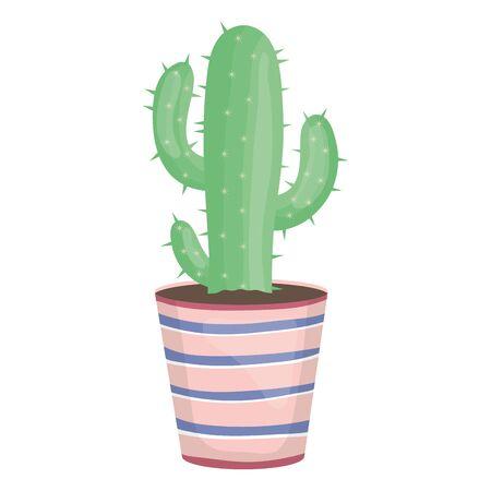 exotic cactus plant in ceramic pot