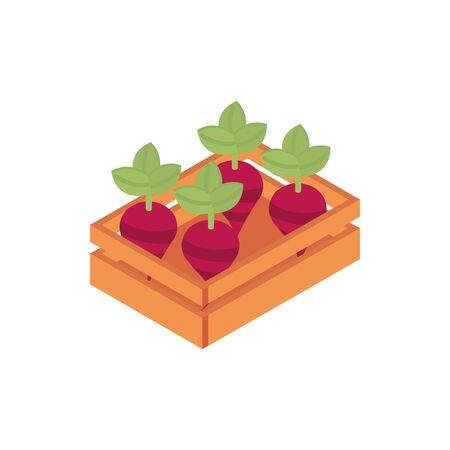 farm beets in box harvest agriculture isometric icon vector illustration