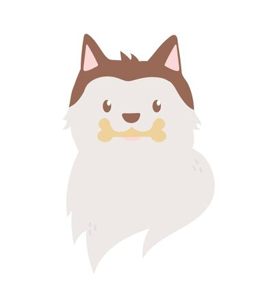 siberian dog head pet with bone in mouth on white background