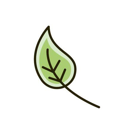 leaf foliage ecology nature drawing