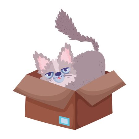 cat sitting in cardboard box abandoned pets
