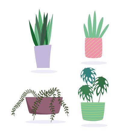 potted plants decoration botanical interior isolated design