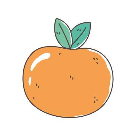 orange fruit fresh nutrition healthy food isolated icon design vector illustration