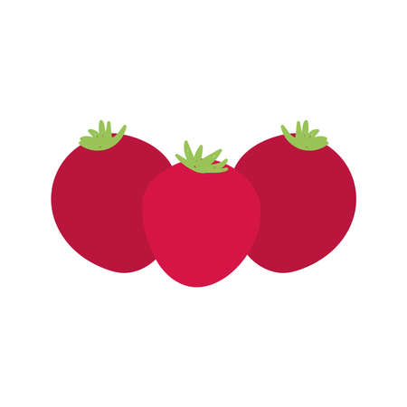 tomatoes vegetables fresh nutrition food isolated icon design white background vector illustration