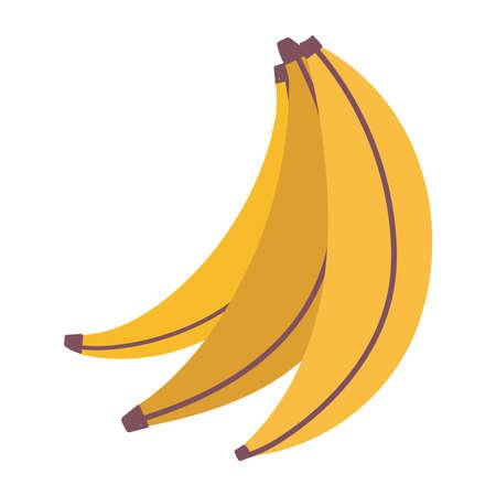 fresh fruit tropical bananas isolated icon design white background vector illustration