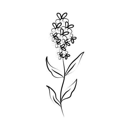 minimalist tattoo flower stem petals line art herb and leaves vector illustration