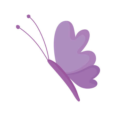 beautiful butterfly delicate insect isolated icon white background vector and illustration